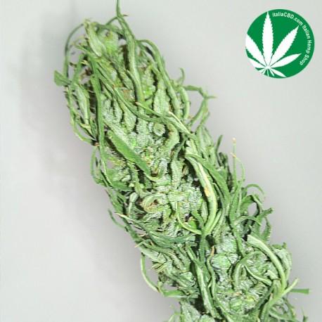 Cannabis Legale - Carmagnola Selezionata